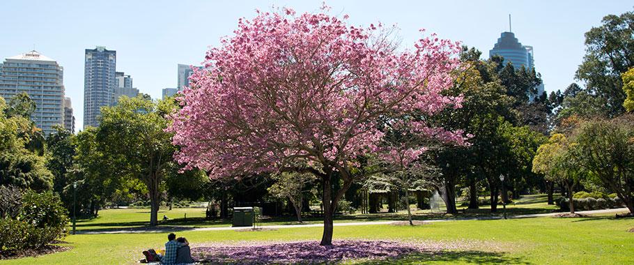 澳洲布里斯班旅游攻略 布里斯班植物园 Brisbane City Botanic Garden