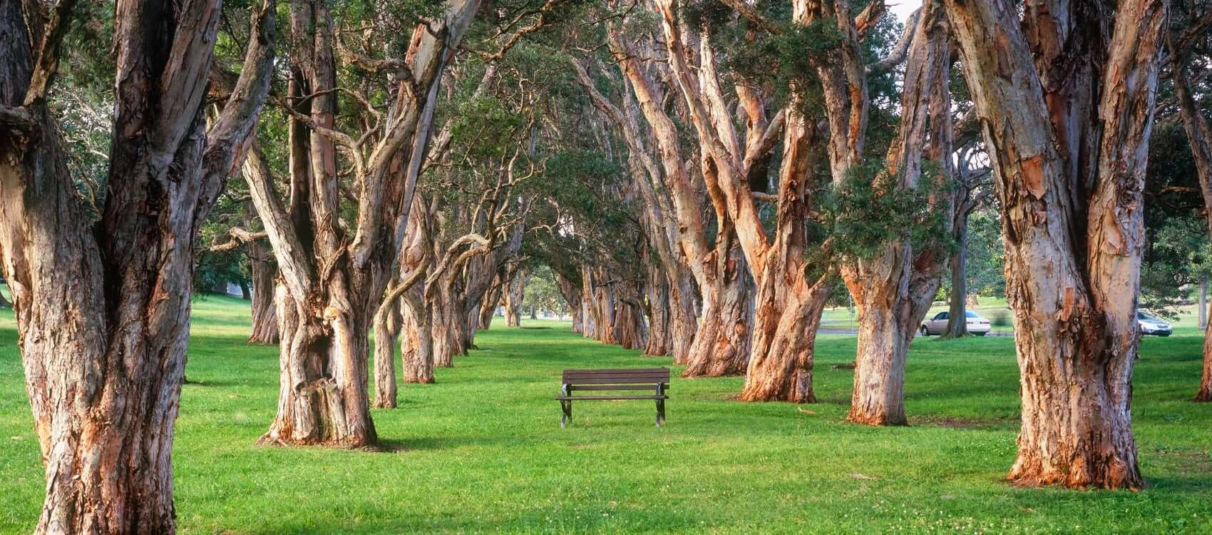 悉尼公园Centennial Park
